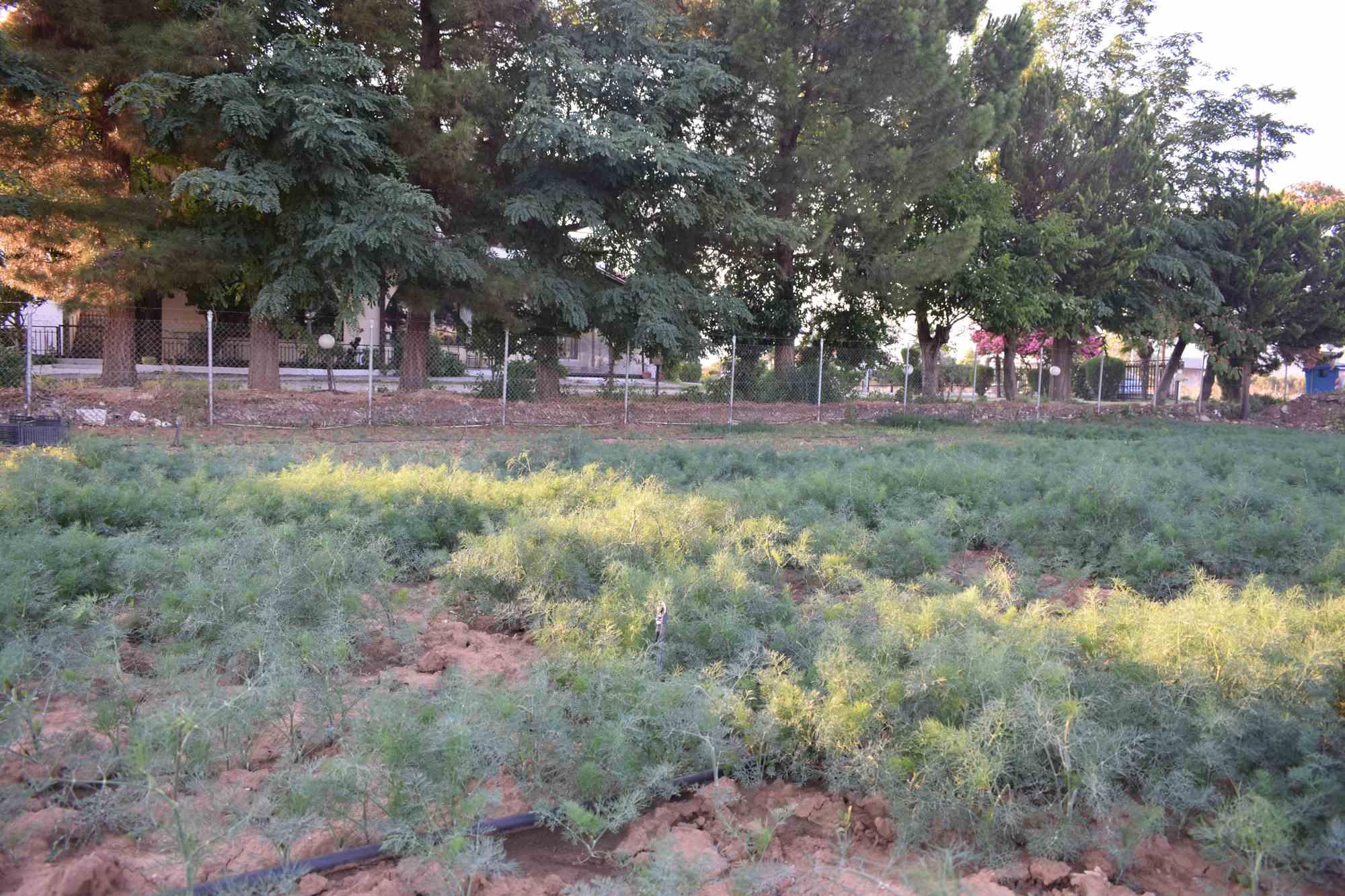 Τ' Αρχοντικό Λαχανόκηπος